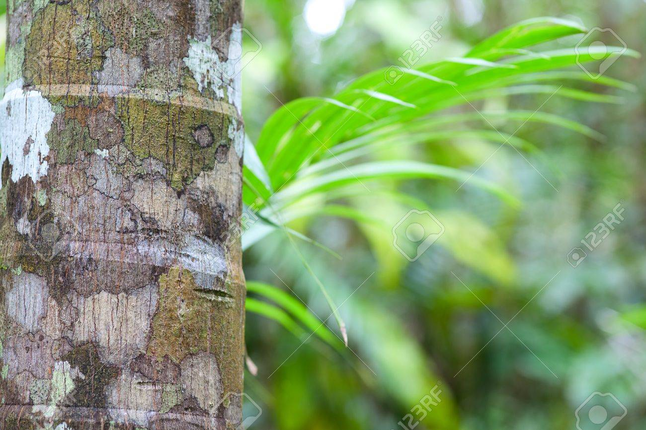 Tropical Background Rainforest Detail Of Palm Tree Trunk And.. Stock ...