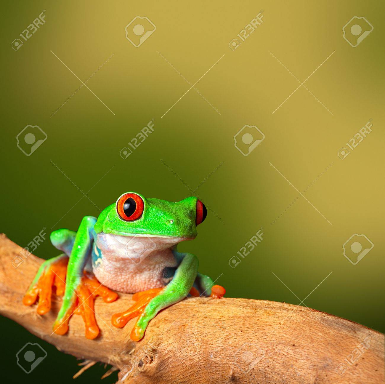 Fantastic Red Eyed Tree Frog Coloring Page Ideas - Coloring Page ...