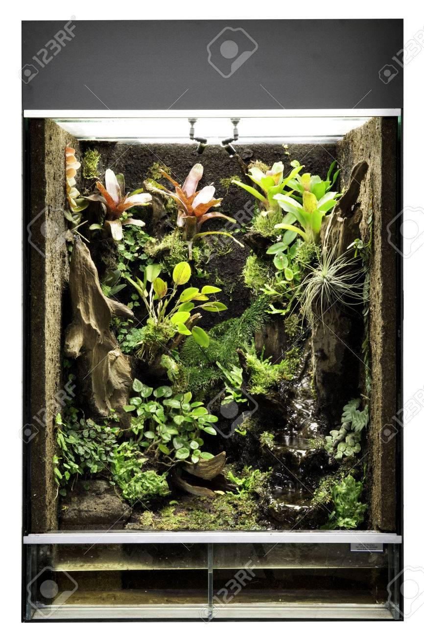Tropical Rain Forest Terrarium Or Paludarium For Exotic Pet Animals