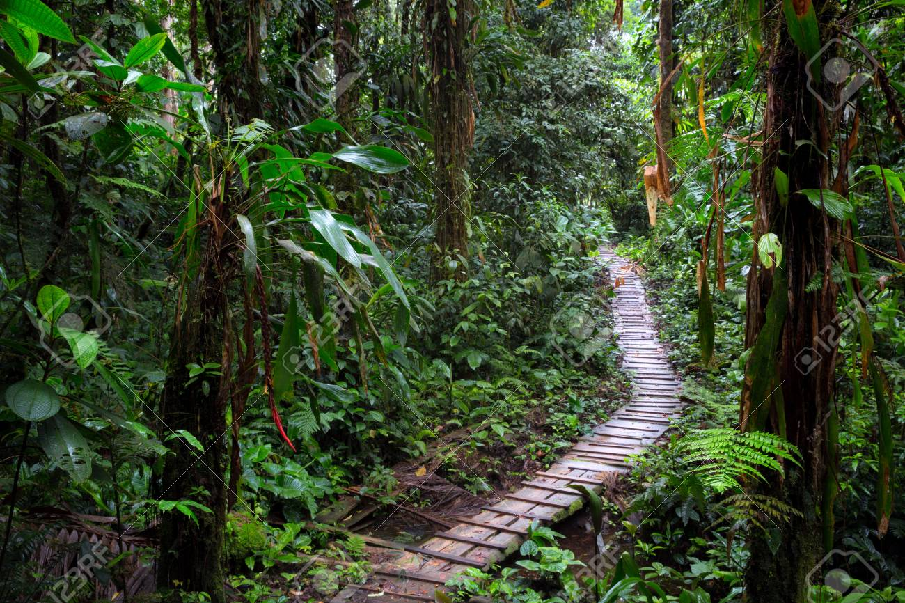 Rain Forest Trail In The Amazon Rainforest Of Colombia A Wooden
