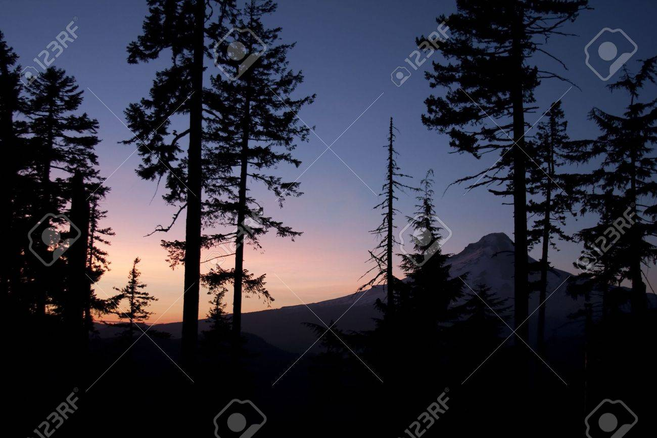 Beautiful Sunset view of Mt. Hood with Silhouette of Pine Tress in foreground and colorful sky in the background.  Oregon, USA. Stock Photo - 6250404