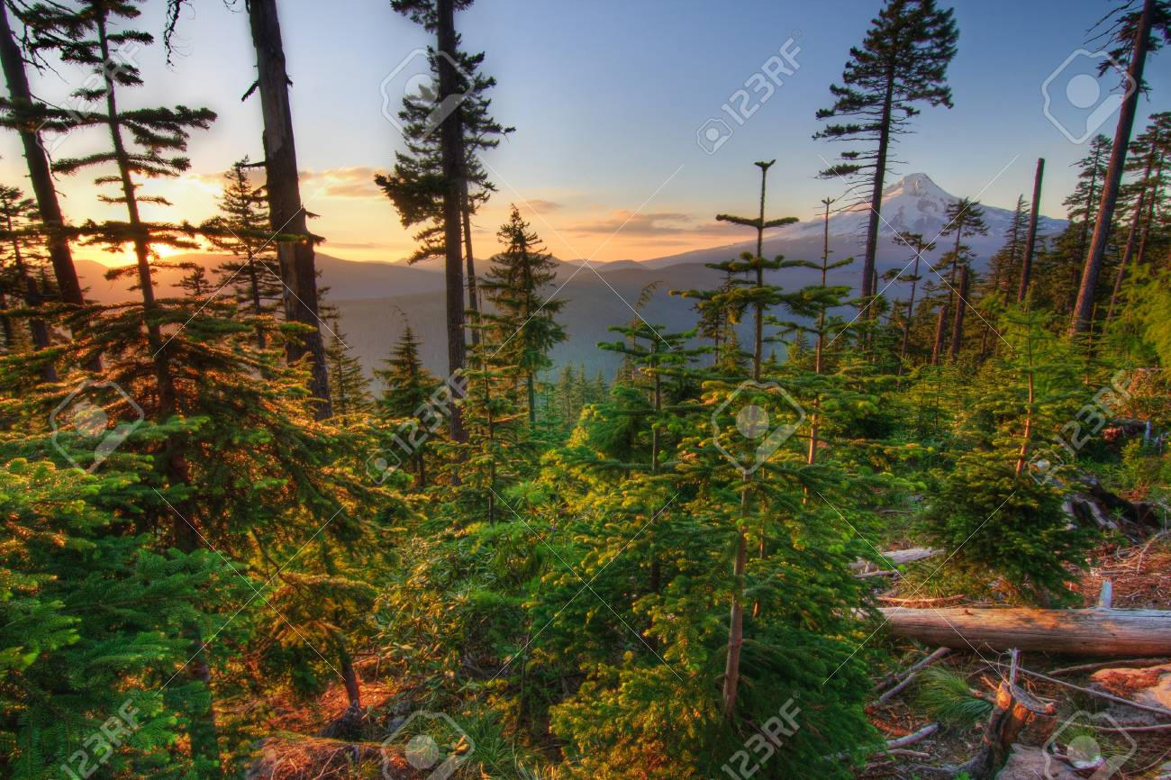 Majestic View of Mt. Hood on a bright, sunny day during the summer months. Stock Photo - 10201966
