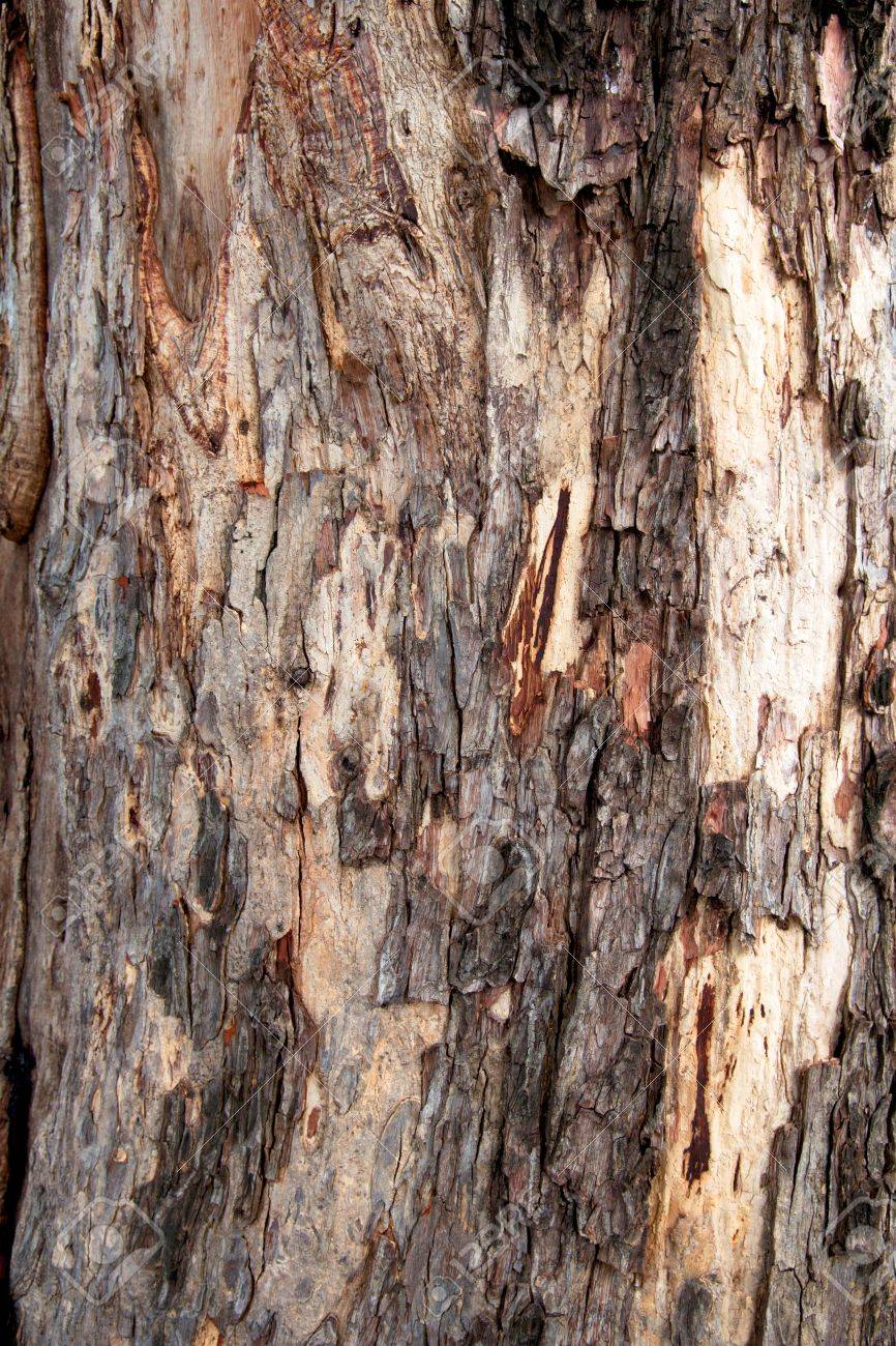 Bark Wooden texture - Bark Pattern of Old tree Stock Photo - 16561980