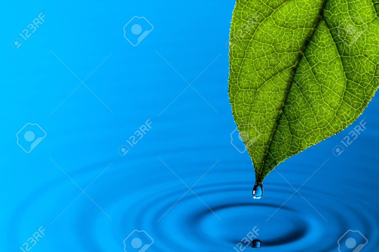 Green Leaf and Water Drop with Reflection Stock Photo - 13417905