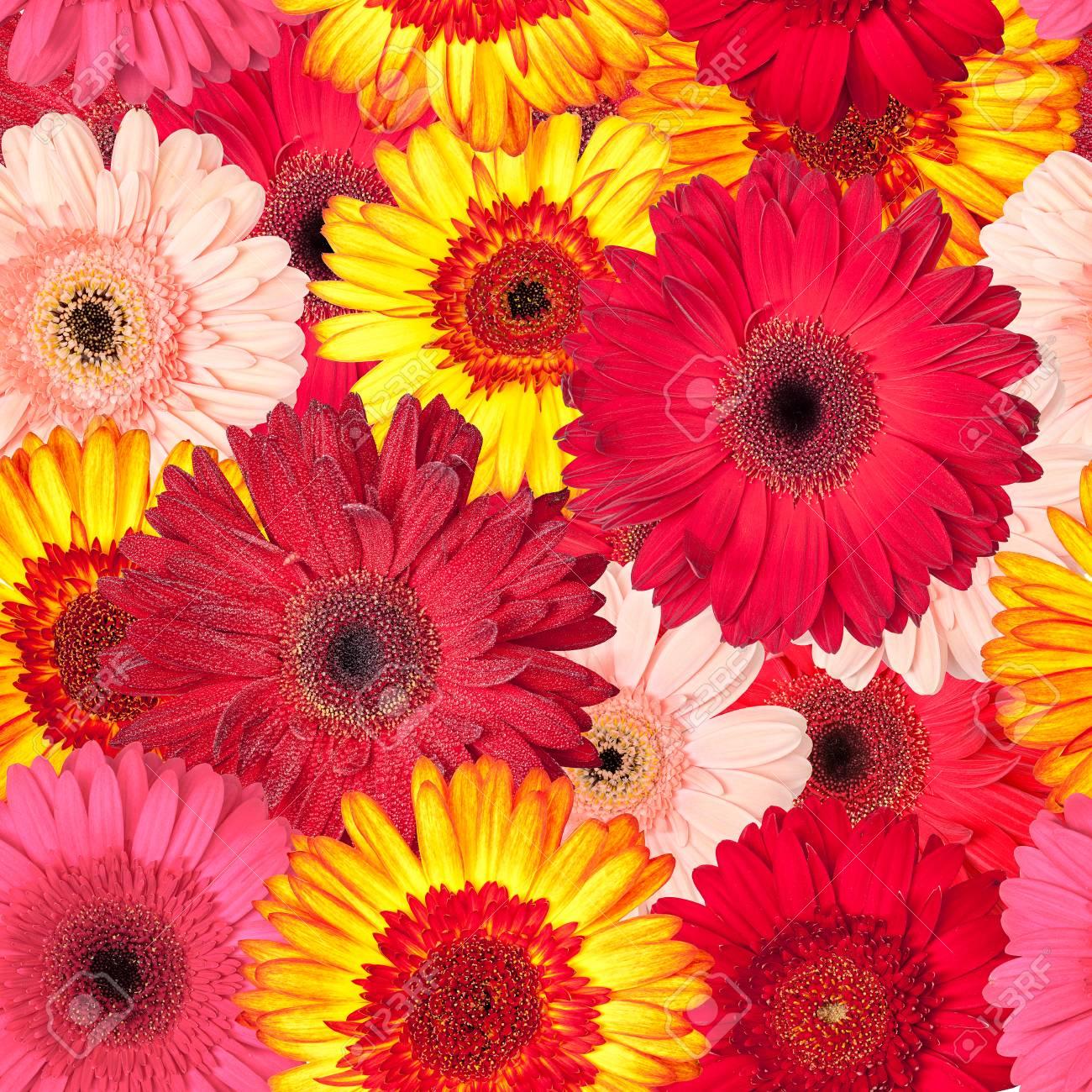 鮮やかなガーベラ 壁紙からのシームレスなパターン の写真素材 画像