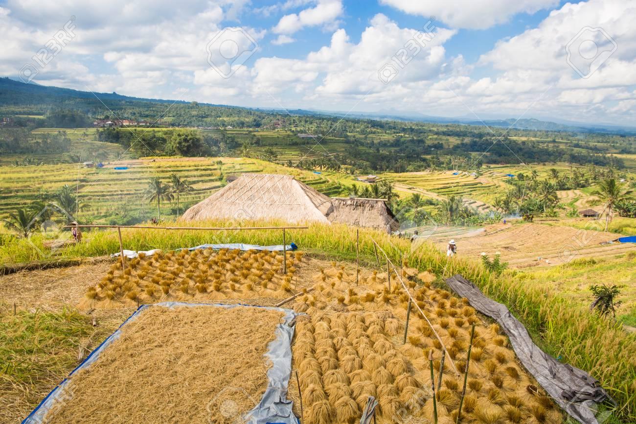 Vista Panorámica De La Terraza De Arroz Jatiluwih En Bali Indonesia