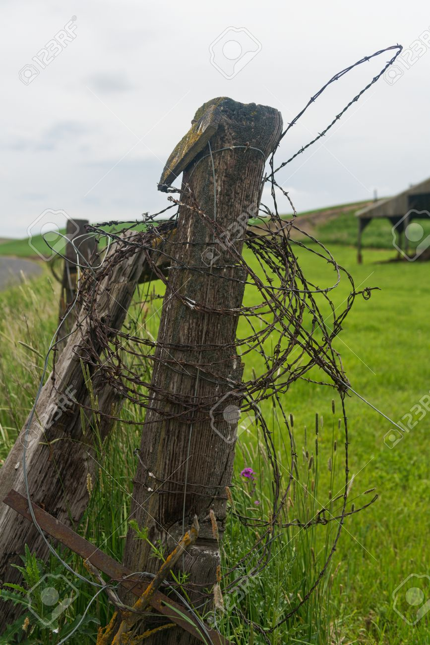 Barbed Wire Wound Around A Fence Post, Palouse, Washington Stock ...
