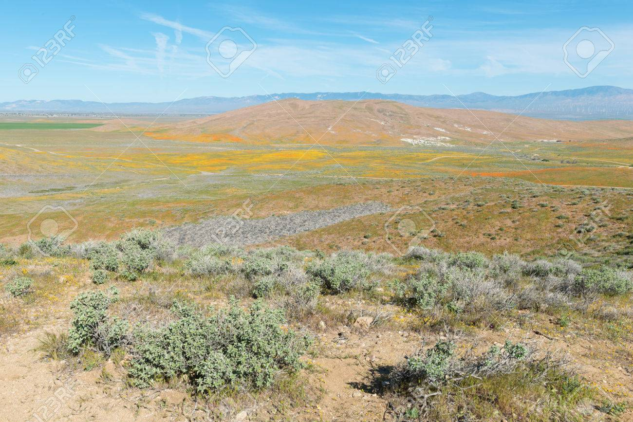 Spring blooms at the California Poppy Reserve, Lancaster, California