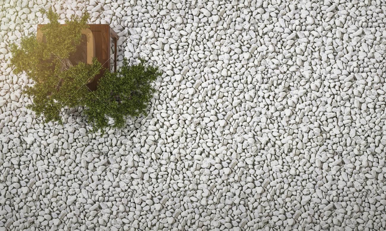 3D rendu bonsaï dans le jardin zen japonais avec du gravier et des galets  sur fond