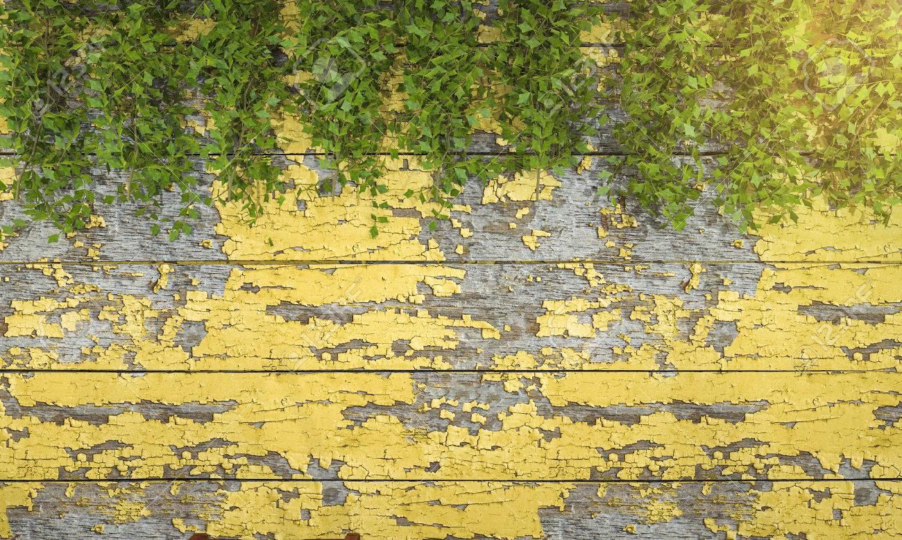 3d Rendering Ivy Vegetation On Art Wooden Wall Stock Photo ...
