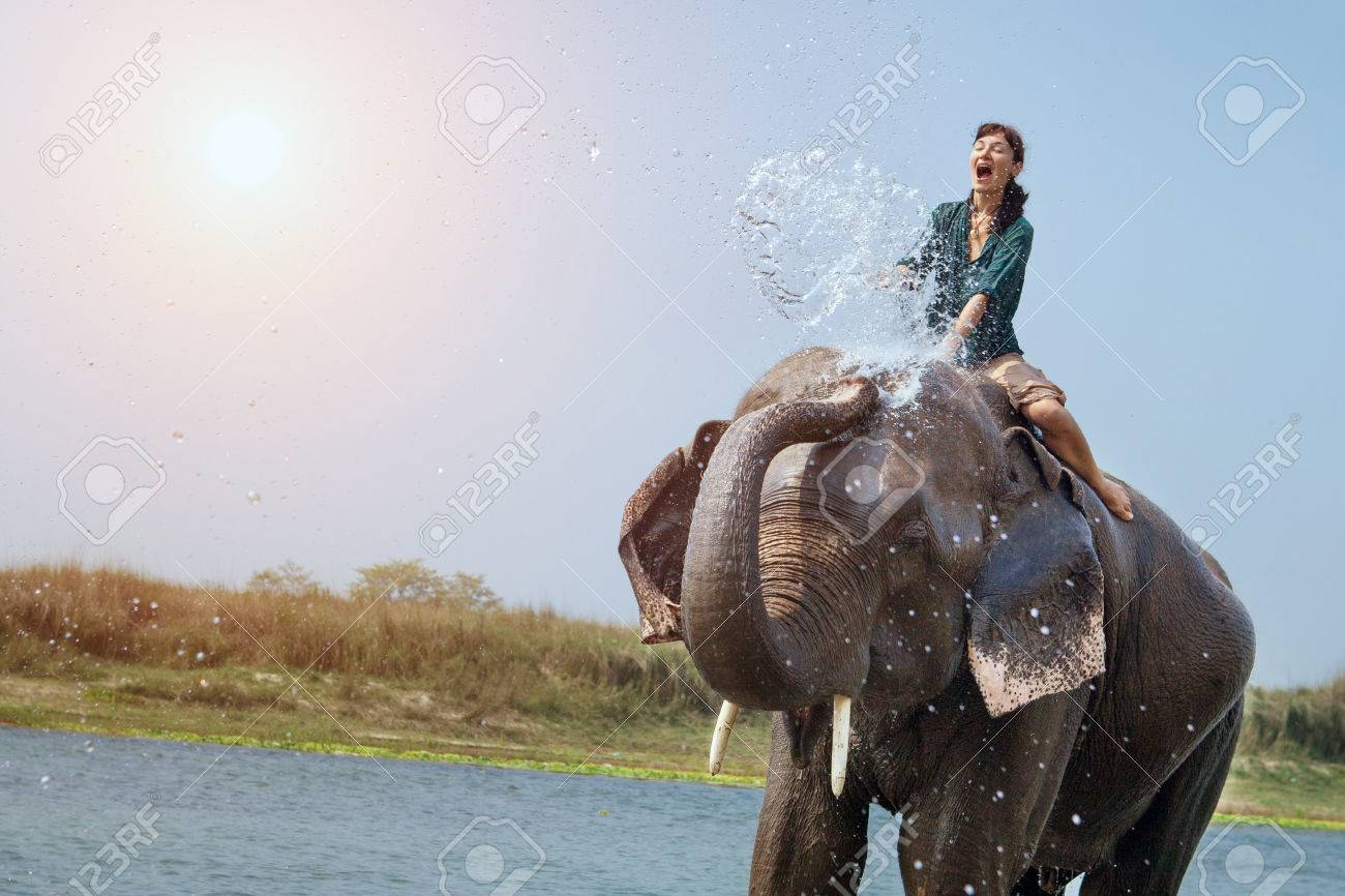 elephant stock photos royalty free elephant images and pictures