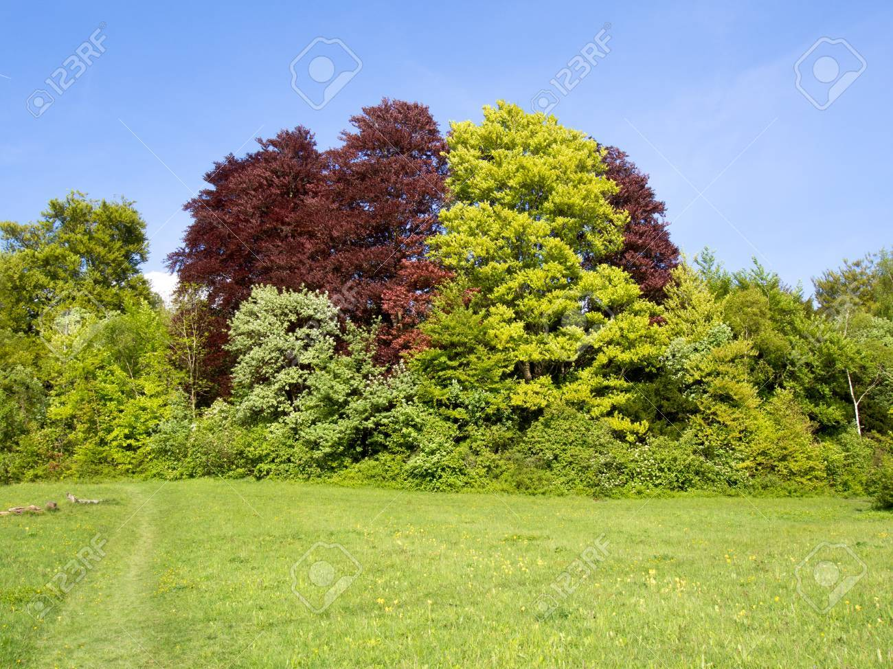 Different Colored Trees On Edge Of A Field Stock Photo, Picture And ...