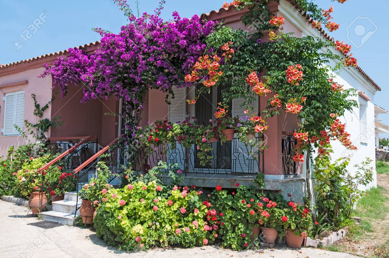 Colorful plants and flowers outside a house