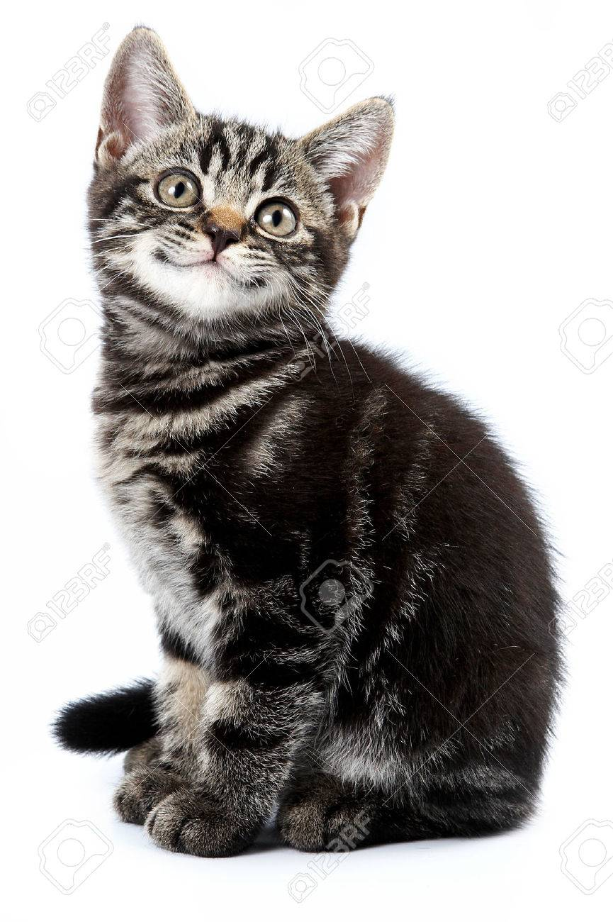 Funny striped kitten sitting and smiling (isolated on white) - 45325030