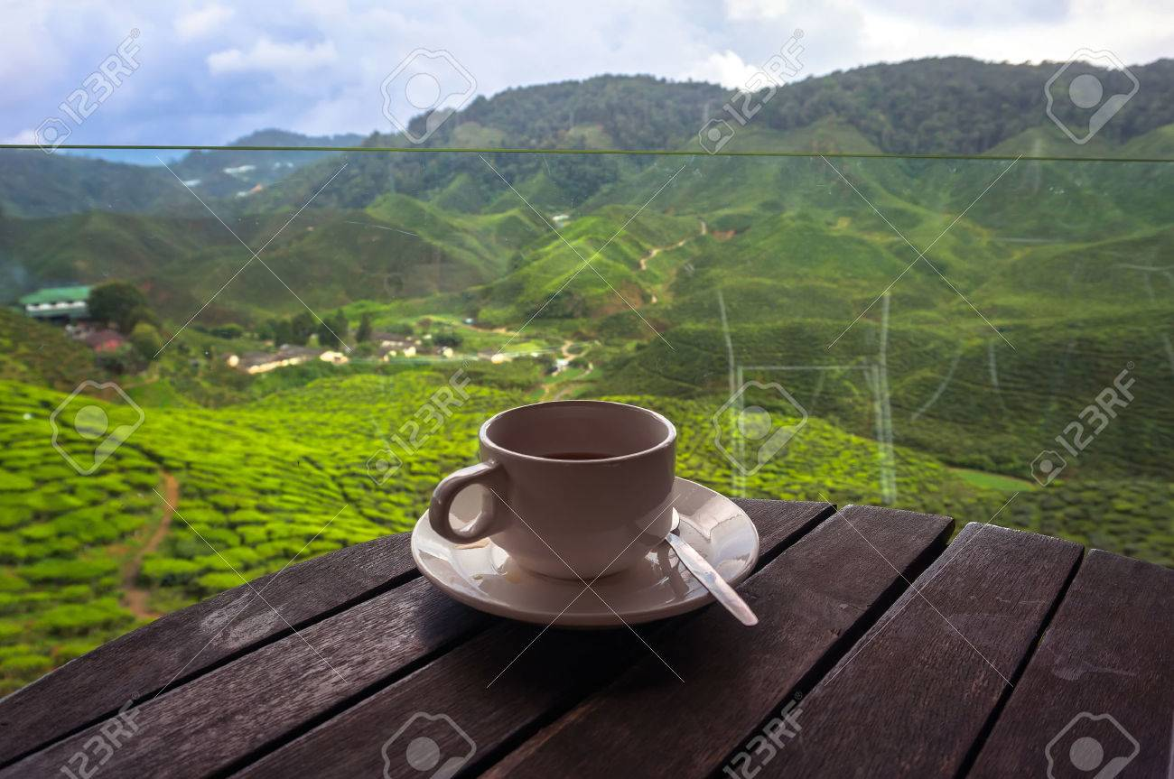 Cup of tea in the beautiful tea plantations in the mountains of Malaysia - 42185696