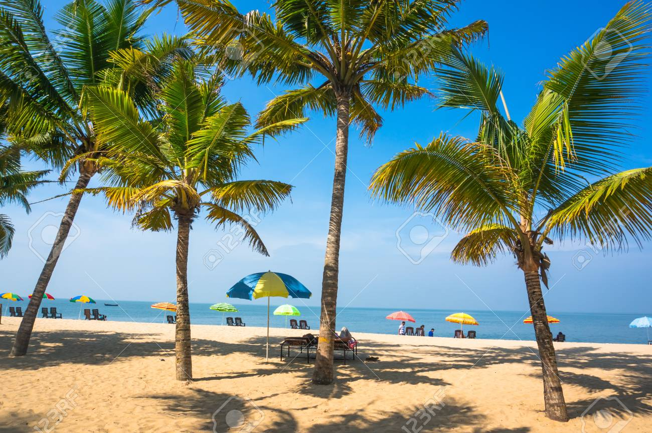 beautiful landscape with big green palm trees in the foreground to the background of tourist umbrellas and sunbeds on a beautiful exotic beach in South India Kerala. - 74704218