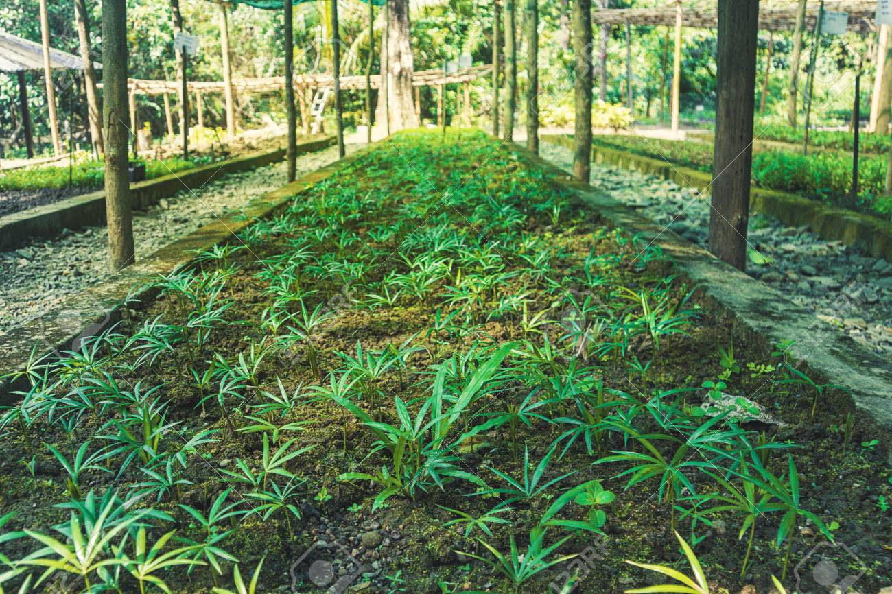 garden with green plants under a canopy  Agriculture in India