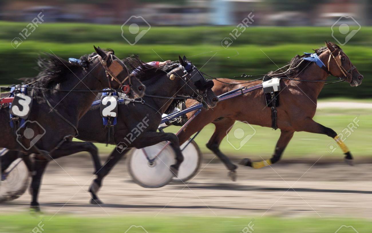 Horse race - 10157369