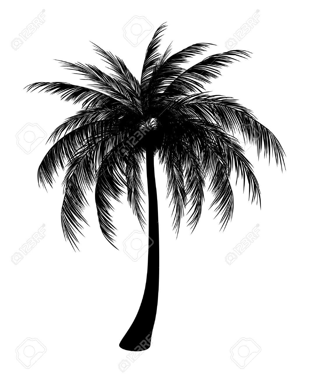 Silhouette of single palm - 28517077