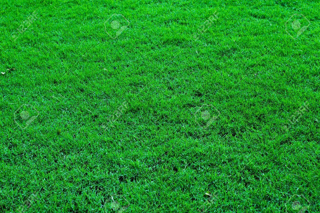 Цвет grass это какой цвет