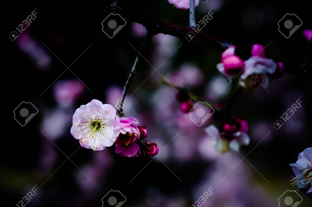 The Flowers Bloom In Early Spring And Some Have Been Open And