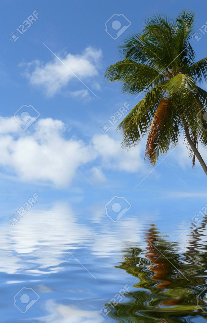 Tropical palm tree, branch, leaves Stock Photo - 3647633