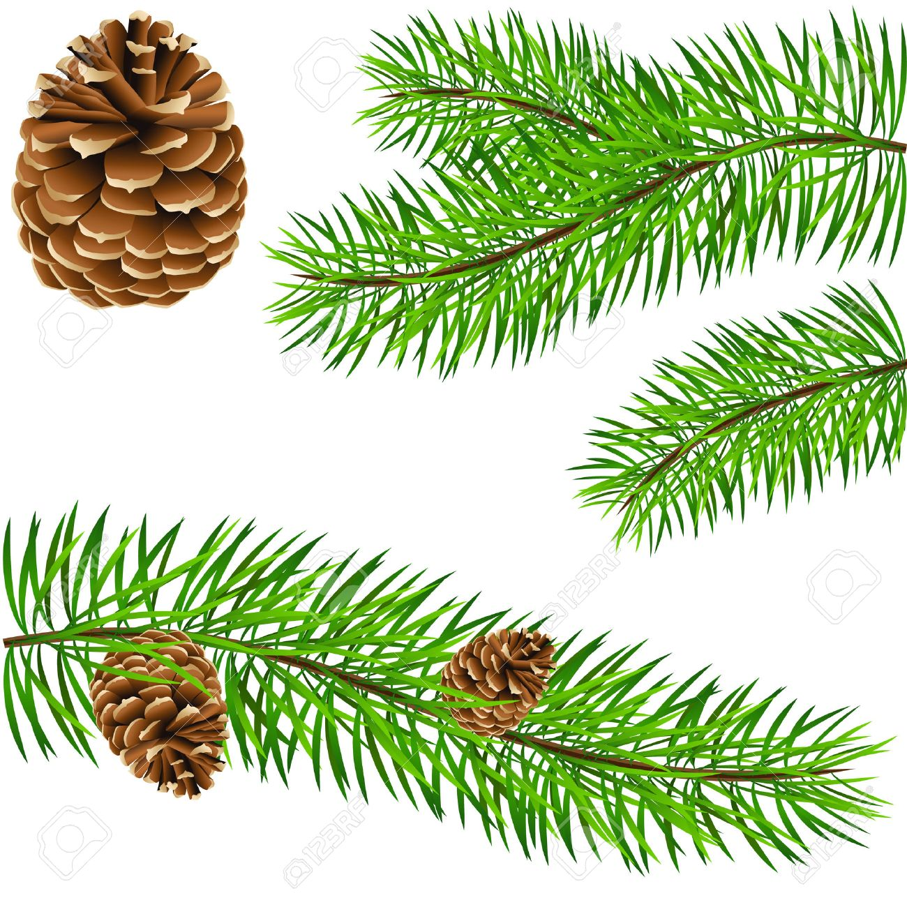 pinecone and pine branches Stock Vector - 8311707