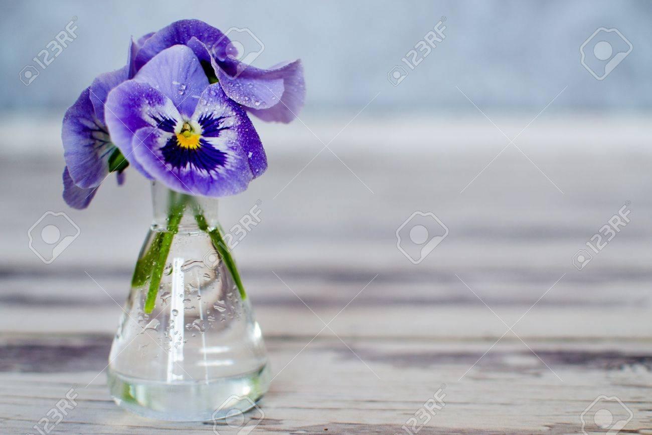 Viola Del Pensiero Fiori