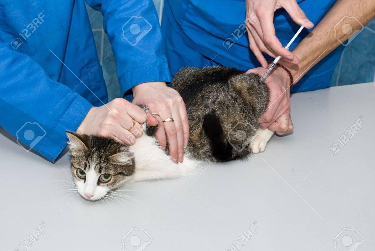 У кошки слезятся глаза: что делать в домашних условиях 365