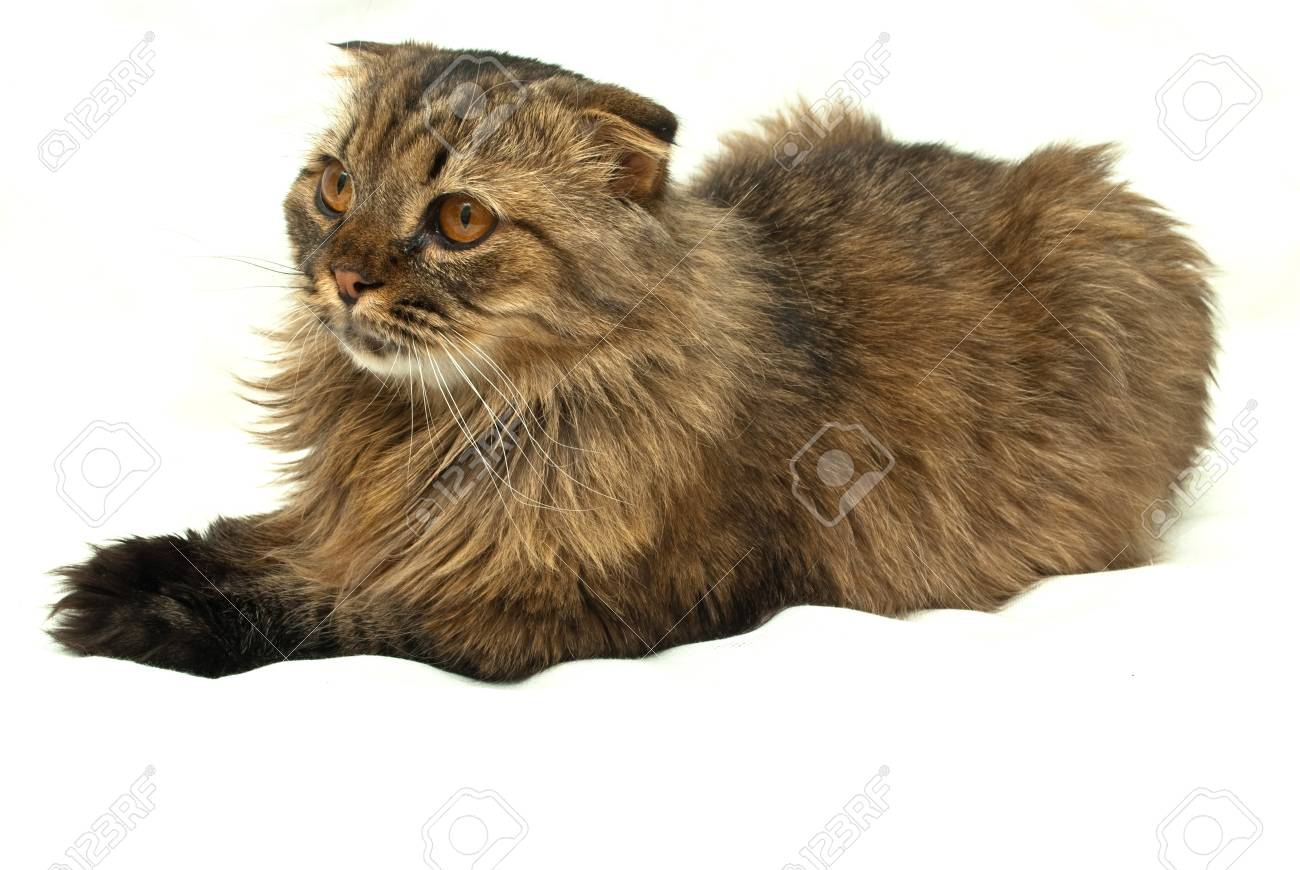 Cat on a white background Stock Photo - 9032267