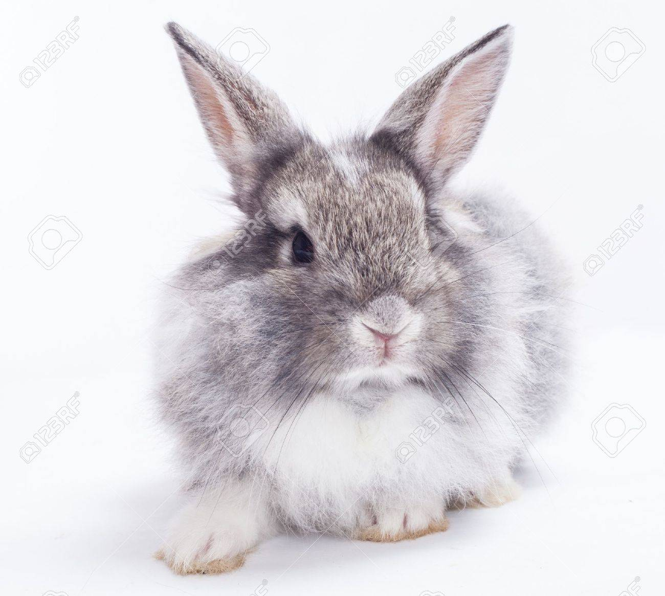 Rabbit isolated on a white background Stock Photo - 15097393