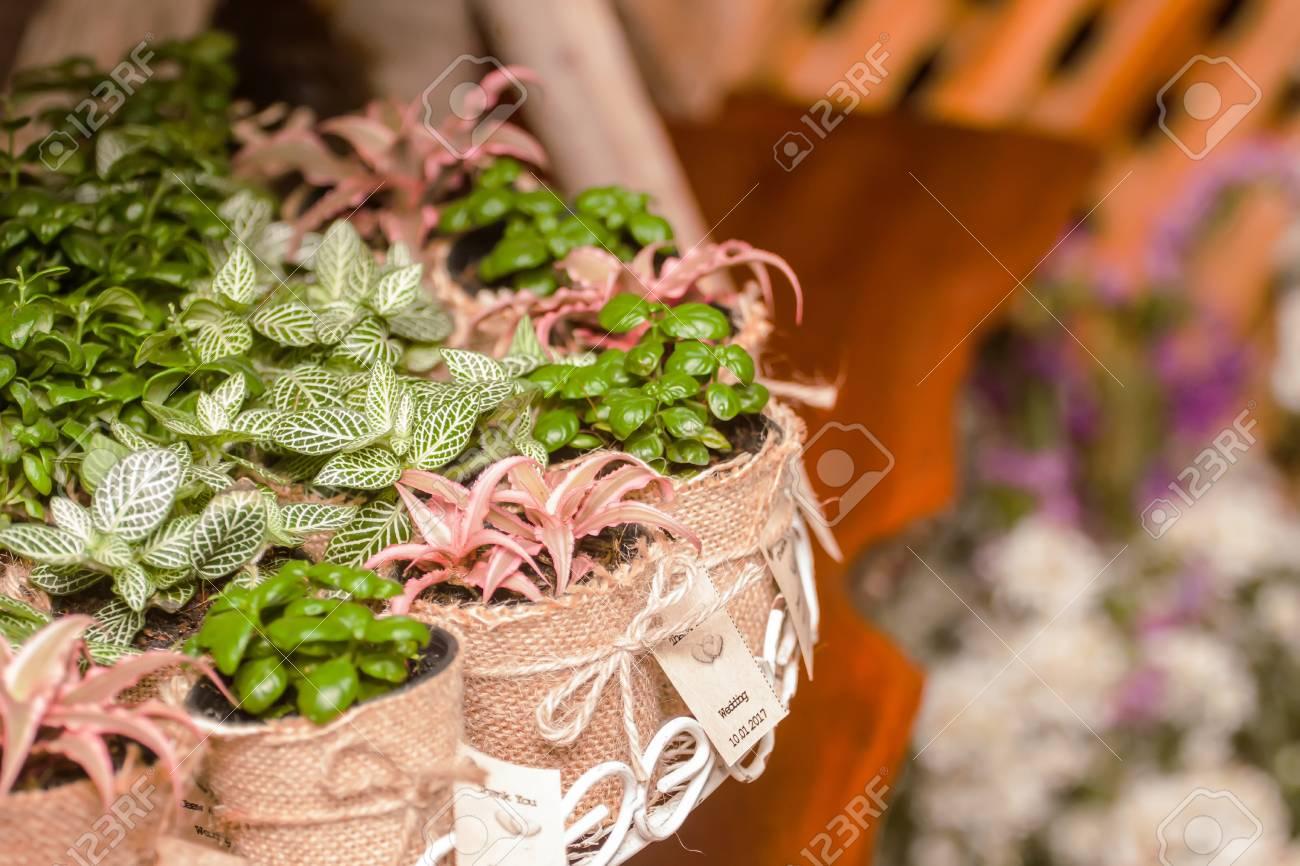 Großzügig Bäume Für Hochzeit Bevorzugungen Ideen - Brautkleider ...