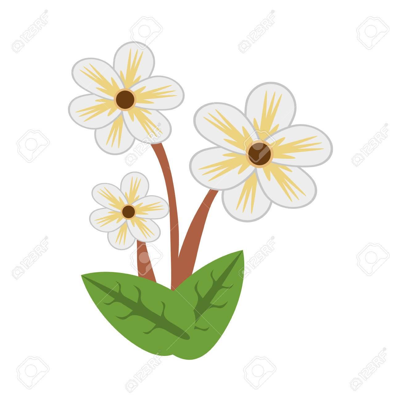 Jasmine Flower Spring Image Vector Illustration Eps 10 Royalty Free