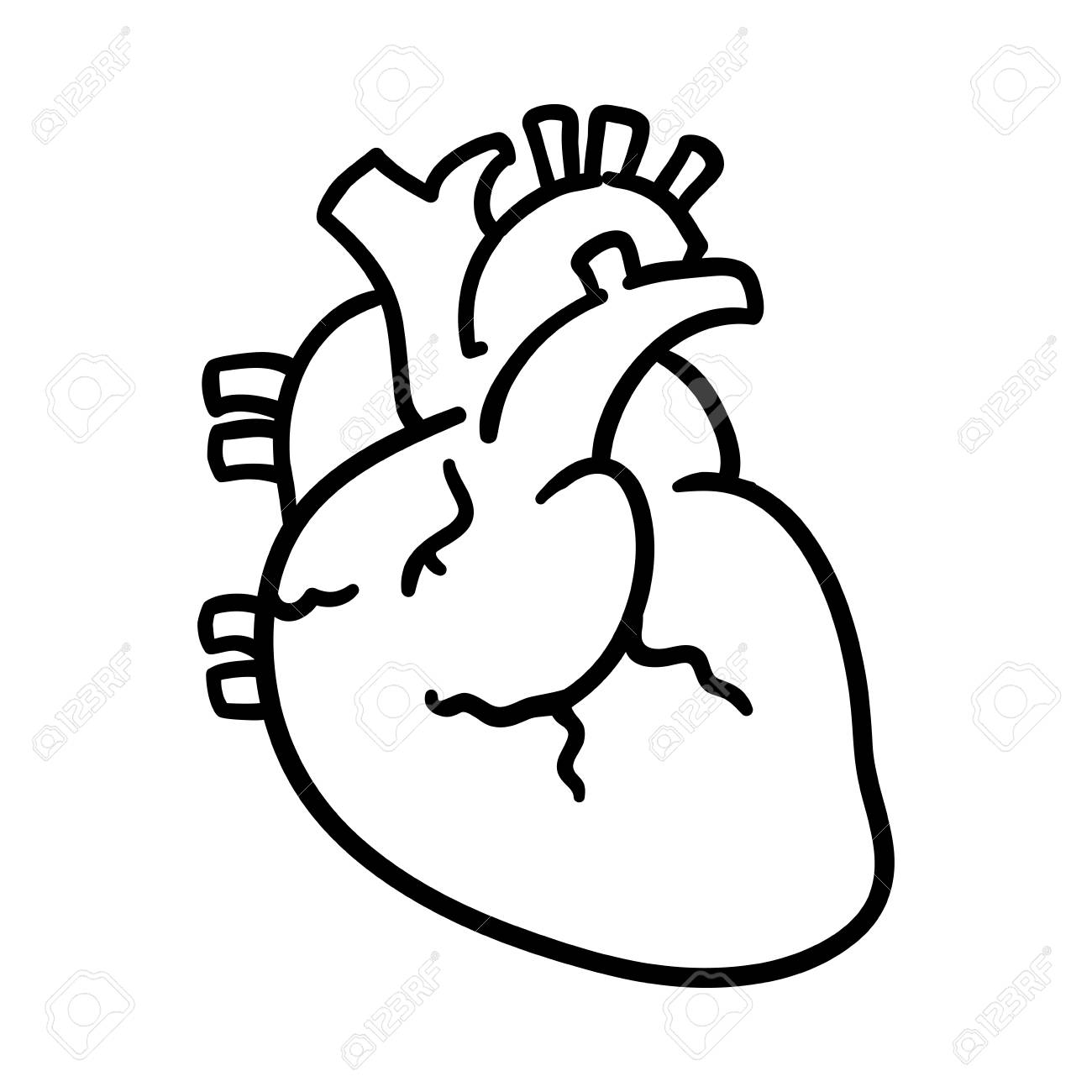 isolated human heart icon vector illustration graphic design