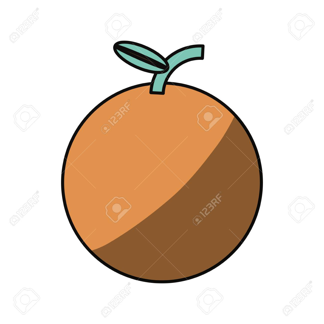 Orange Fruit Graphic Images
