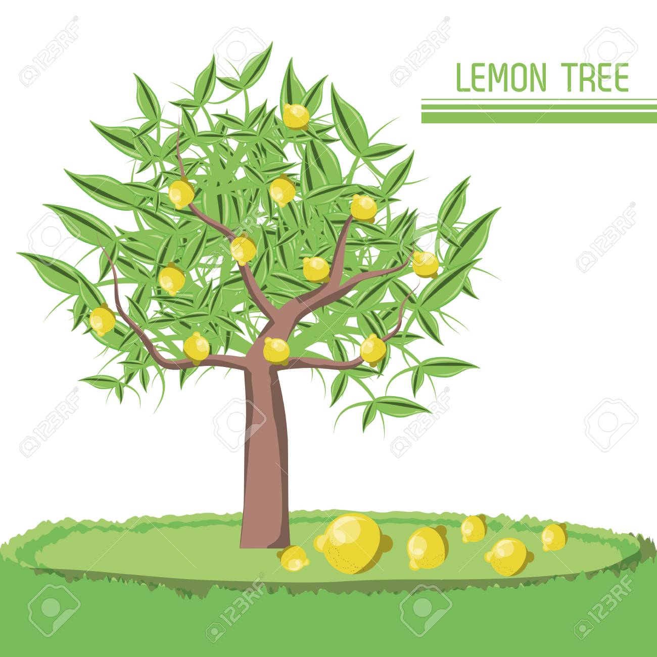 Lemon Tree Icon Over White Background Colorful Design Vector ...