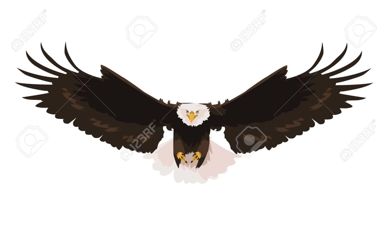 beautiful bald eagle flying vector illustration design - 121159909