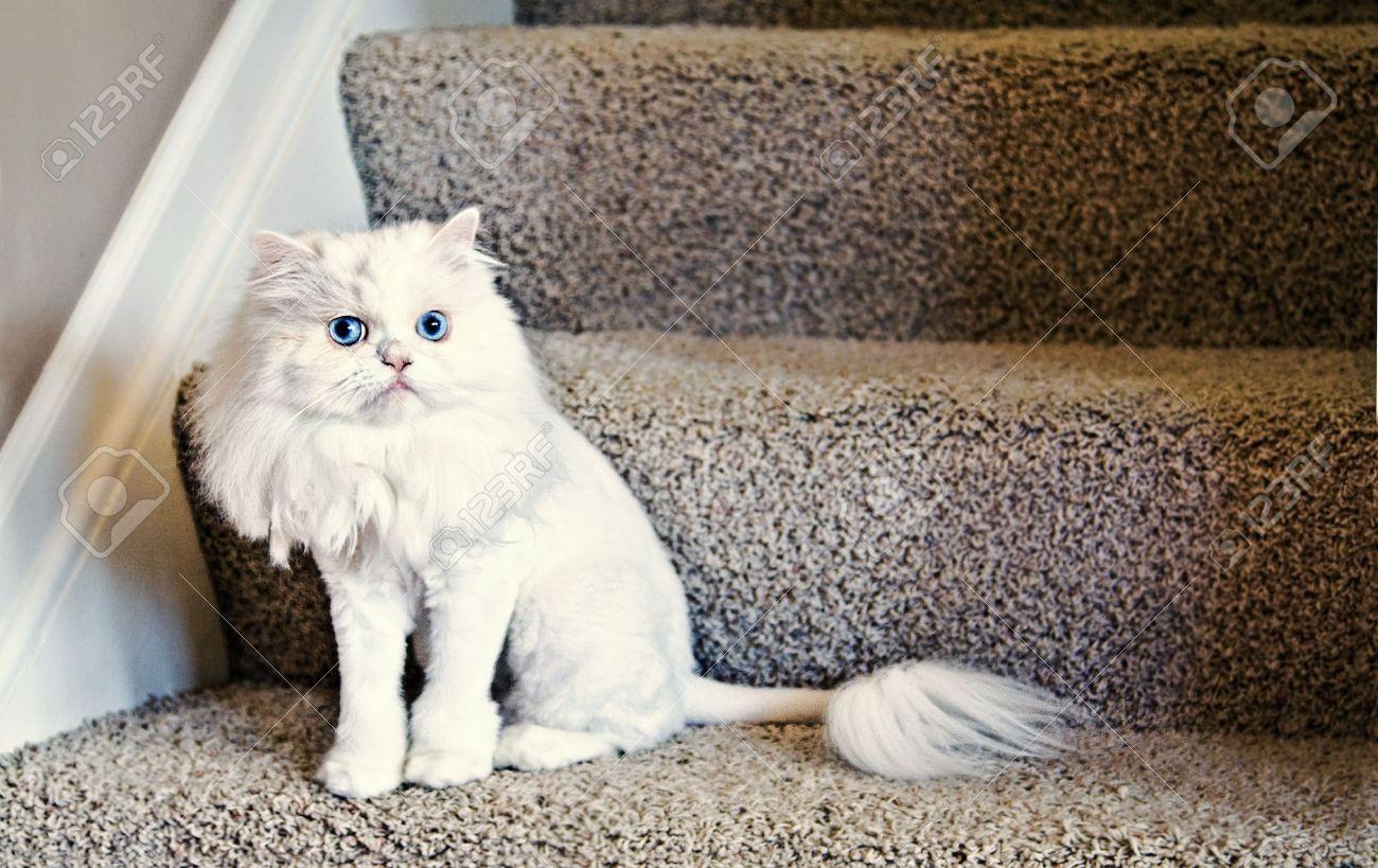 Corte de pelo en gatos