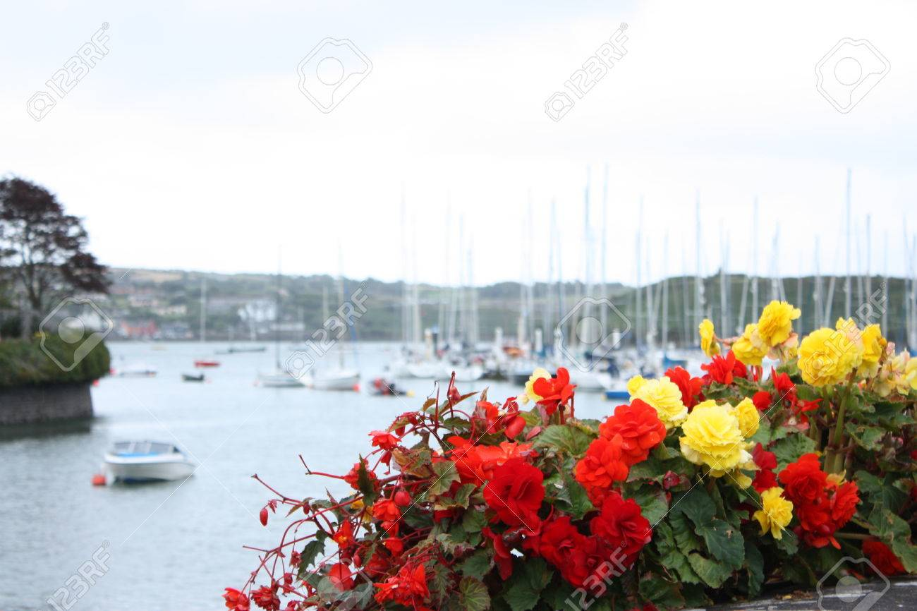 Red And Yellow Flowers Kinsale Harbour Cork Ireland Stock Photo