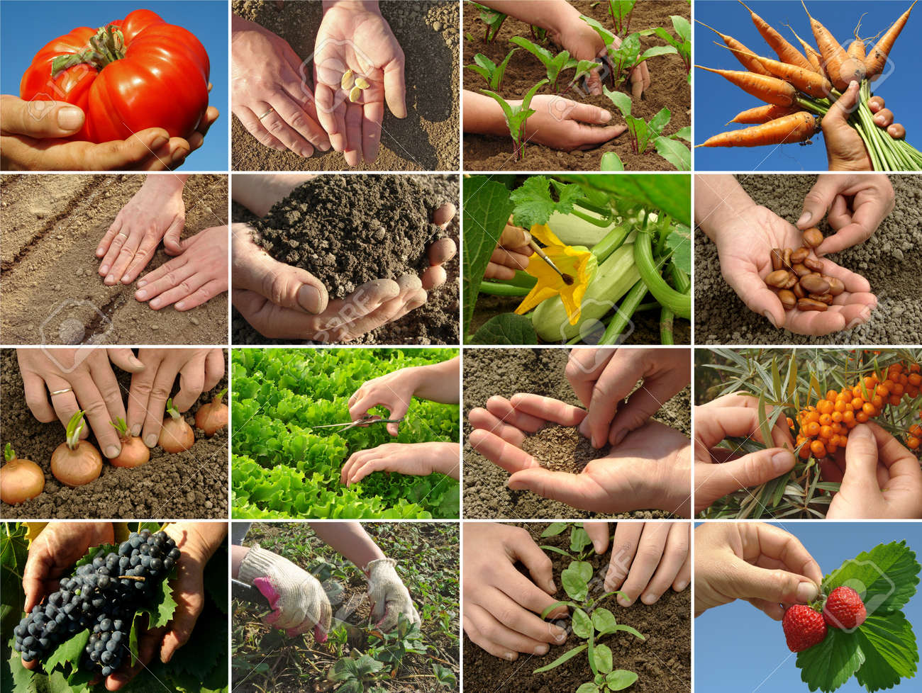 hands of farmer in action Stock Photo - 11061996