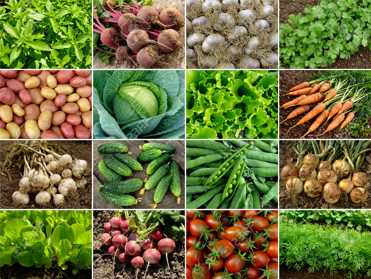 organic vegetables and greens collection Stock Photo - 11285932