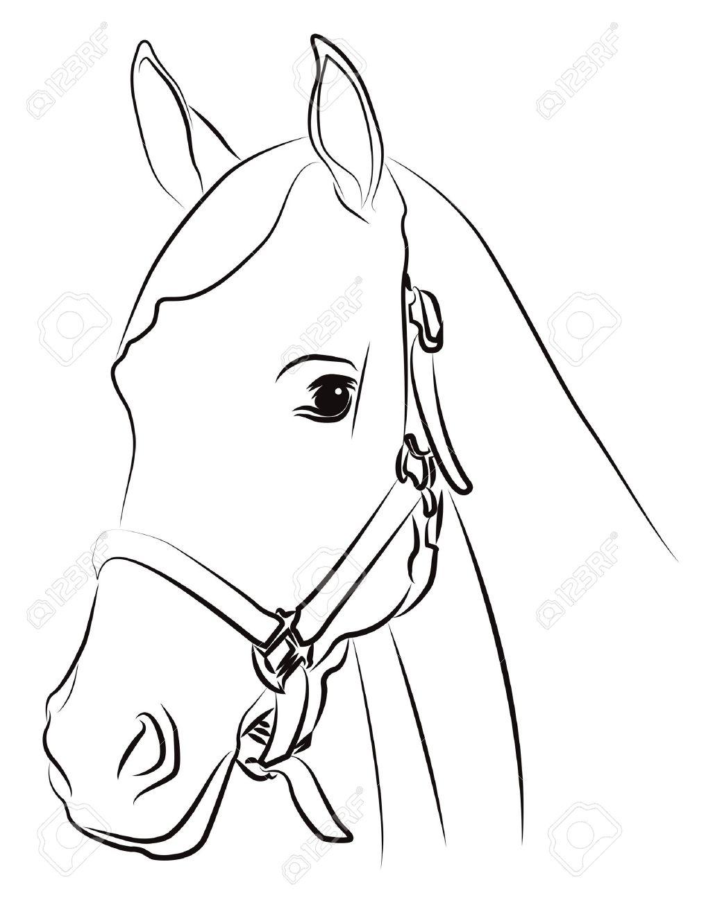 Раскраска голова лошади