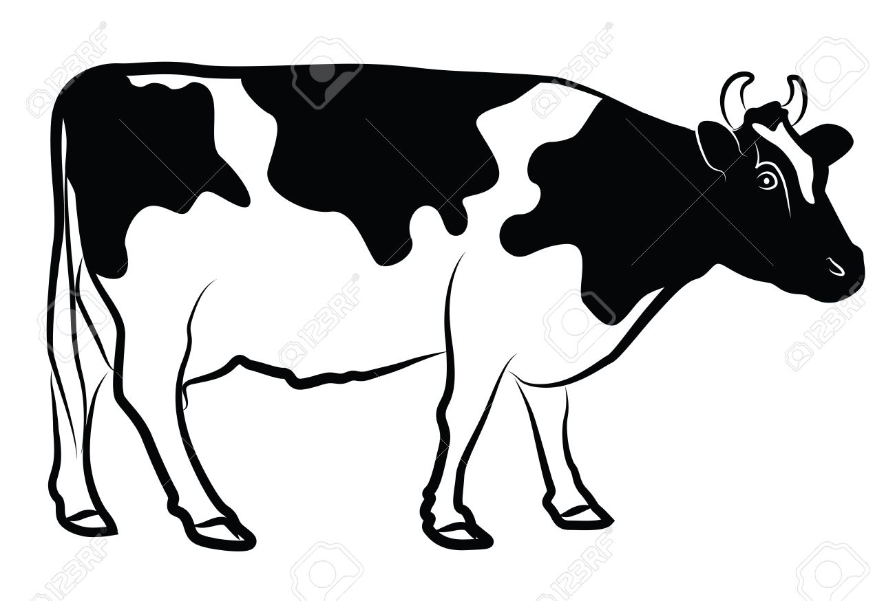 cow silhouette isolated on white royalty free cliparts vectors and rh 123rf com