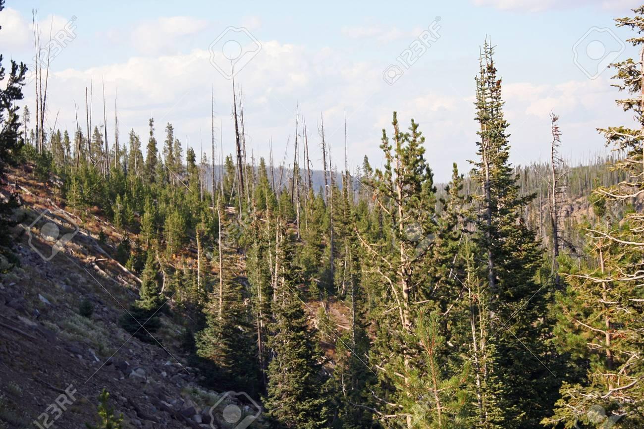 Yellowstone Stock Photo - 530859