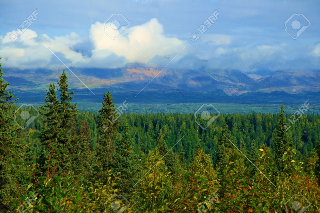 Lush forest and plants in the Alaskan wilderness. Stock Photo - 4157169