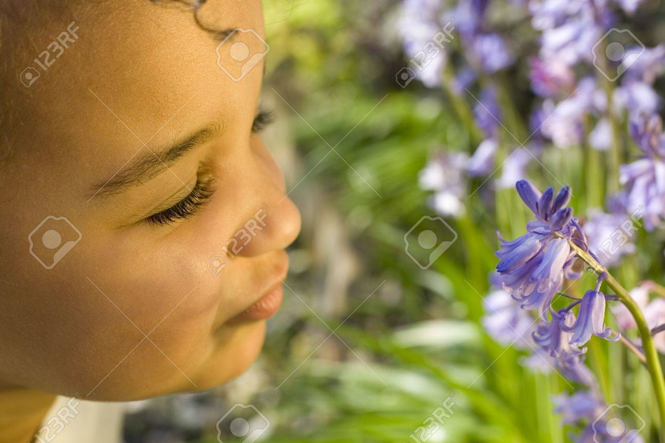 A beautiful mixed race little girl smelling bluebells Stock Photo - 408232