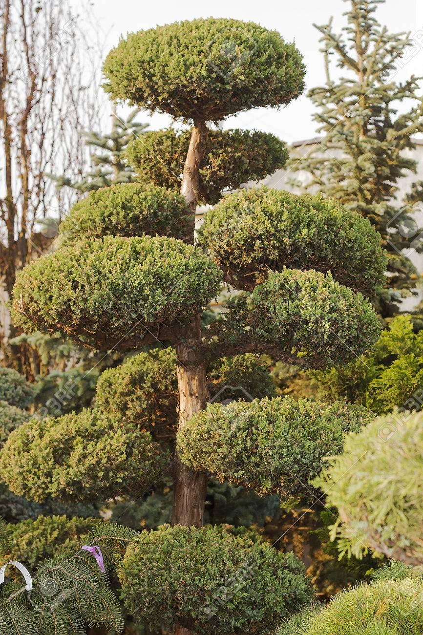 Fine Evergreen Garden Image Collection - Brown Nature Garden ...