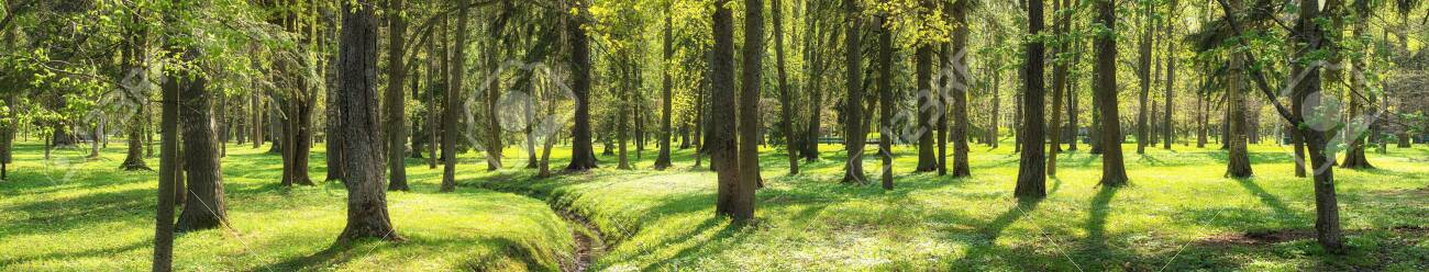 nature background. green grass and trees, forest panorama - 148437331