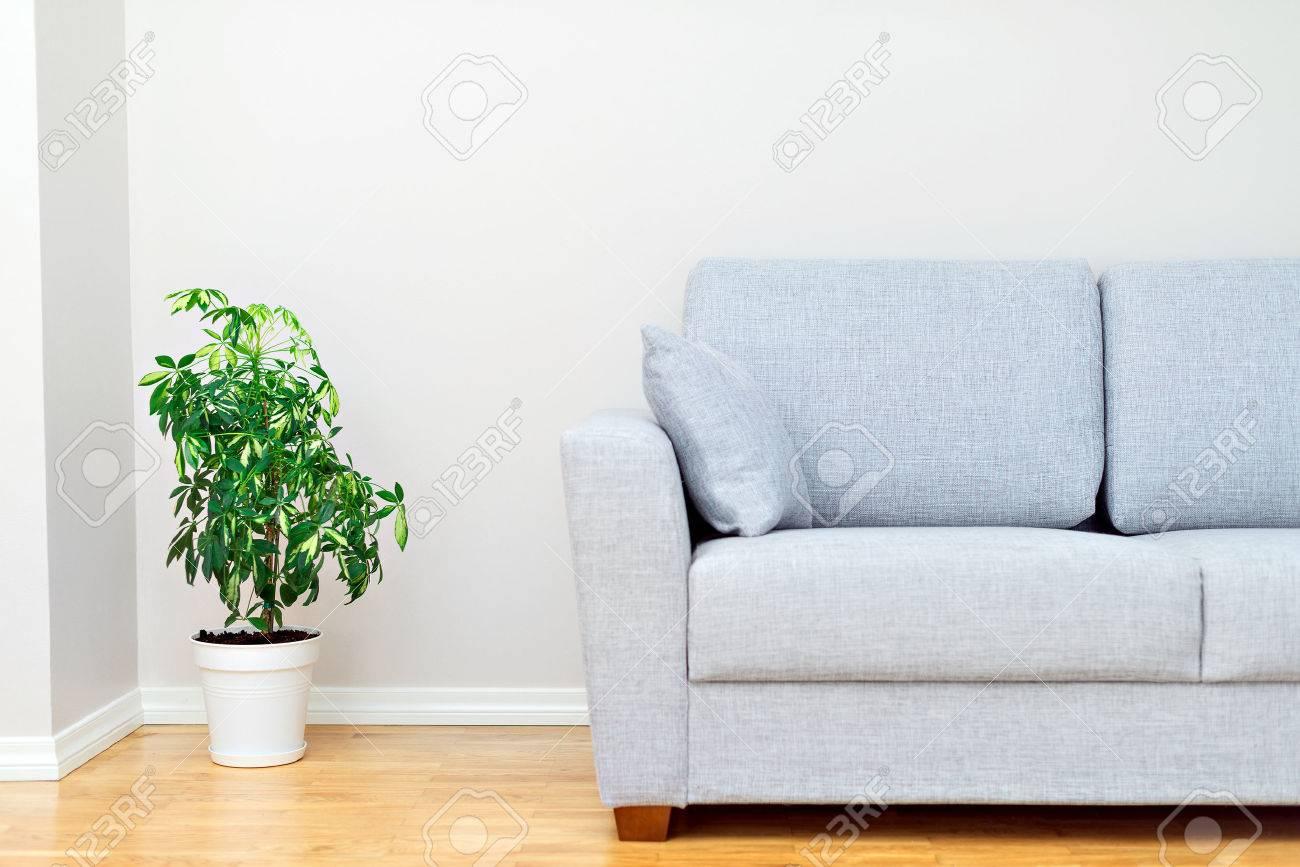 Gray sofa and green plant. Room interior. - 44391741