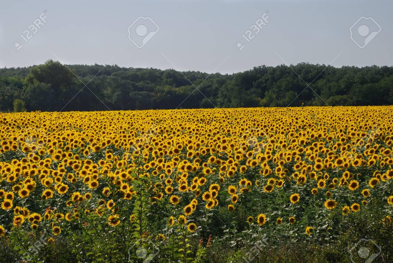 Summer field - 4358381